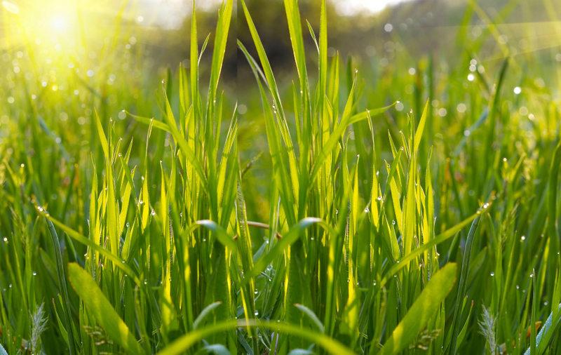 Plant Based Journey