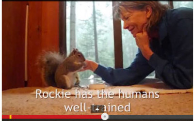 Rockie, our rescue squirrel and plant-based journey mascot – facing the challenge of her life
